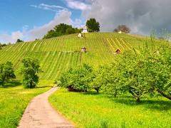 Grafenberg (almresi1) Tags: weinberge vineyards weg way street strase trees bäume hütte remstal schorndorf mountain spring frühling wiese gras