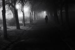Foggy night (www.streetphotography-berlin.com) Tags: street streetphotography streetlife fog foggy night nightshot misty alley trees light shadow woman alone blackandwhite blackwhite