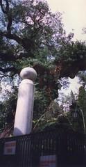 TARAMA276