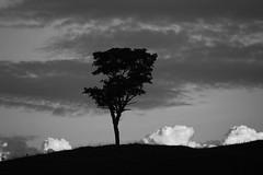 Tree (7696) (Jorge Belim) Tags: flora pb