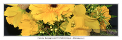 Fine-Art-Print-DSC-7904 (fatima_suljagic) Tags: photographer melbourne melbournephotography photoprints canvasprints postcards australia fatimasuljagicmelbourne artstudiomaja fineartprints nikond800 largeformatprints landscapephotography
