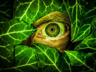 Poison Ivy (HMM)