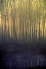 s e g r e t i (swaily ◘ Claudio Parente) Tags: lake tree acqua albero nebbia fog claudioparente swaily nikon