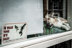 Beware of the Dog (PaulHoo) Tags: nikon d700 city urban sign text humor fun amsterdam holland 2017 dog window pet animal netherlands