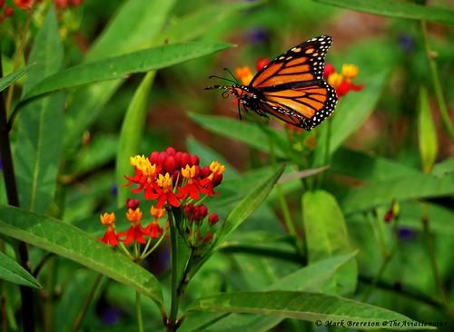 Butterfly landing on a flower