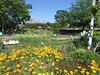 Flowers in Kiba Park (walking.biking.japan) Tags: tokyo kotoku kiba flowers park