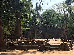"Ta Prohm (""Jungle Temple""), Cambodia"