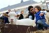 Terug naar de middeleeuwen (Omroep Zeeland) Tags: zierikzee 800 middeleeuwen history historie middeleeuws gezelschap geit kind dieren animal monnickendam feest verkleed zeeland
