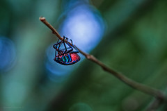pole-dancing bug (gnarlydog) Tags: pentacon50mmf18 closeup bug insect australia backlit nature colorful bokeh manualfocus speckledhighlights contrejour vintagelens softfocus subjectisolation shallowdepthoffield green