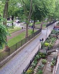 IMG_20170517_080904_182 (Carol B London) Tags: sgc flowers floral stepney stepneygreencourt stepneygreen e1 londone1 flowering bushes residentgarden gardens ids