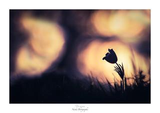 La silhouette de l'âme
