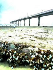 Goose Barnacles and the Pier (Steve Taylor (Photography)) Tags: goosebarnacles barnacles log treetrunk art digital sand wood newzealand nz southisland canterbury christchurch newbrighton beach ocean pacific pier sea dawn texture