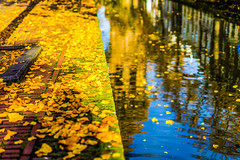 A golden moment (chenjieyu) Tags: delft zuidholland 荷兰 nl rotterdam yellow autumn holland netherlands tree river blue leaves reflection water colour village town