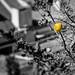 lemon in the city