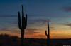 Cacti Silhouettes (Ken Mickel) Tags: arizona cacti cactus clouds desert estrellla goodyeararizona landscape landscapedesert outdoors plants saguaro topaz topazadjust nature photography silhouette silhouettes sunset