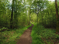 potteric carr pathway (Johnson Cameraface) Tags: 2017 april spring olympus omde1 em1 micro43 mzuiko 1240mm f28 johnsoncameraface pottericcarrnaturereserve doncaster southyorkshire yorkshire pottericcarr yorkshirewildlifetrust ywt naturereserve nature path walking green trees