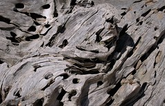driftwood (flowergirlaaa (busy bee, catching up)) Tags: oldwood driftwood brownseaisland weathering eroded worn wooden tree trunk closeup