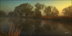 Morning Mist. Part 2. (Picture post.) Tags: landscape nature green water springtime mist sunrise trees reflections reeds sunlight paysage arbre eau brume
