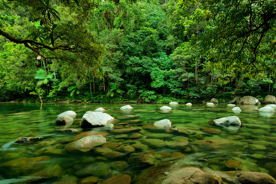 Queensland's Daintree Rainforest is one of the most complex on Earth