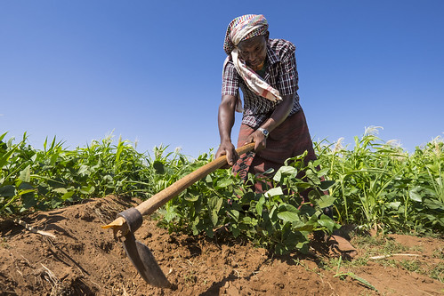Farmer Abdishakur Mohamed (50) working in a field near Unaa village, Dollow, Somalia.