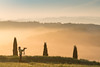 A9906163_s (AndiP66) Tags: sanquiricodorcia sanquirico sonnenaufgang sunrise nebel dunst fog mist sonne sun morgen morning april spring frühling 2017 zypressen cypresses sony alpha sonyalpha 99markii 99ii 99m2 a99ii ilca99m2 slta99ii tamron tamronspaf70200mmf28dildif tamron70200mm 70200mm f28 amount andreaspeters
