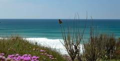 Bird (khan.Nirrep.Photo) Tags: bird bretagne breizh bleu blue beach beauté landscape presquile plage paysage fleur flowers