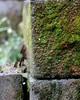 Moss on Cinder Blocks (dsgetch) Tags: uploaded:by=instagram depthoffield backyard eugeneoregon eugene moss cinderblock compost