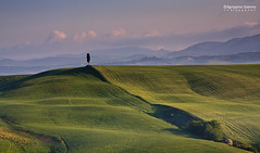Lonely tree (Agrippino Salerno) Tags: cretesenesi asciano tuscany italy hills cypress tree lonely clouds green sky morning sunrise agrippinosalerno canon manfrotto spring beautiful