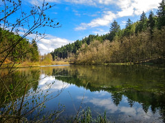 fresh air (All Shine) Tags: forest pond reflction colors nature landscape