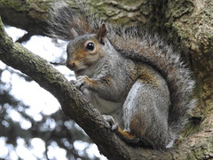 DSCN0956 (markdrabble) Tags: sheffield botanicalgardens squirel nuts
