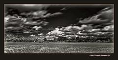 Camp de blat (Paisatge infraroig) A Wheat Field (Infrared Landscape) Vall dels Alforins, la Vall d'Albaida, València, Spain (Rafel Ferrandis) Tags: blat alforins valldalbaida infraroig núvols bn eos5dmkii ef2470mmf40l hdr nwn