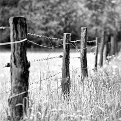 Mamiya185 (salparadise666) Tags: mamiya c330 sekor 180mm super bw orange filter fomapan 100 boxspeed caffenol cl semistand 32min nils volkmer medium format analogue 6x6 square landscape rural nature diagonal