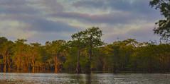 Caddo Panoramic (ChefeGrande) Tags: texas easttexas sunrise earlymorningsun baldcypress reflection serene clouds outdoor water lake landscape trees naturallake spanishmoss river sky