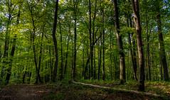 2016.10.01. Mátra (Péter Cseke) Tags: holiday hungary nature travel gyöngyös hevescounty hu