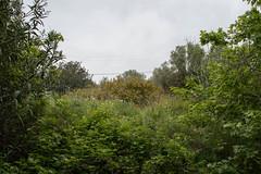 Ψίνθος (Psinthos.Net) Tags: ψίνθοσ psinthos nature φύση εξοχή countryside spring april απρίλησ απρίλιοσ άνοιξη απόγευμα απόγευμαάνοιξησ ανοιξιάτικοαπόγευμα afternoon blossoms άνθη leaves φύλλα άγριαλουλούδια αγριολούλουδα wildflowers flowers λουλούδια χόρτα greens cloudy cloudiness συννεφιά συννεφιασμένηψίνθοσ ελαιόδεντρα ελιέσ olivetrees trees δέντρα κλαδιάδέντρων treebranches brambles bramble βάτοσ βάτα βάτοι κίτριναλουλούδια yellowflowers redflowers κόκκιναλουλούδια λάζαροι λαζάροι lazarus παπαρούνεσ poppies shrub shrubs θάμνοσ θάμνοι κίτριναάνθη yellowblossoms oleander πικροδάφνη πλάτανοσ planetree κοιλάδα κοιλάδαψίνθου κοιλάδαψίνθοσ psinthosvalley valley σκιά shadow sky ουρανόσ