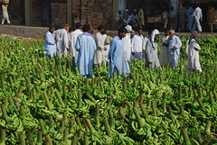 Kaylay (Raja Islam) Tags: kaylay banana new sazbi mandi newsabzimandi karachi pakistan fruit market green buyer agent seller