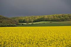 Avant l'averse (mifranc91) Tags: d700 nikon28180 nuages chauds light lumière fleurs flower