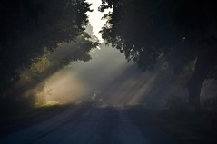 Going Into the Light (CaptPiper) Tags: light beams road