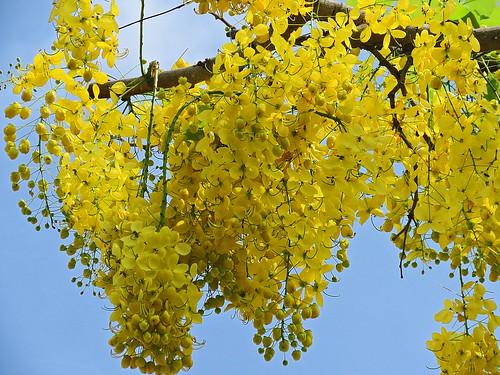 yellow tree in last summer