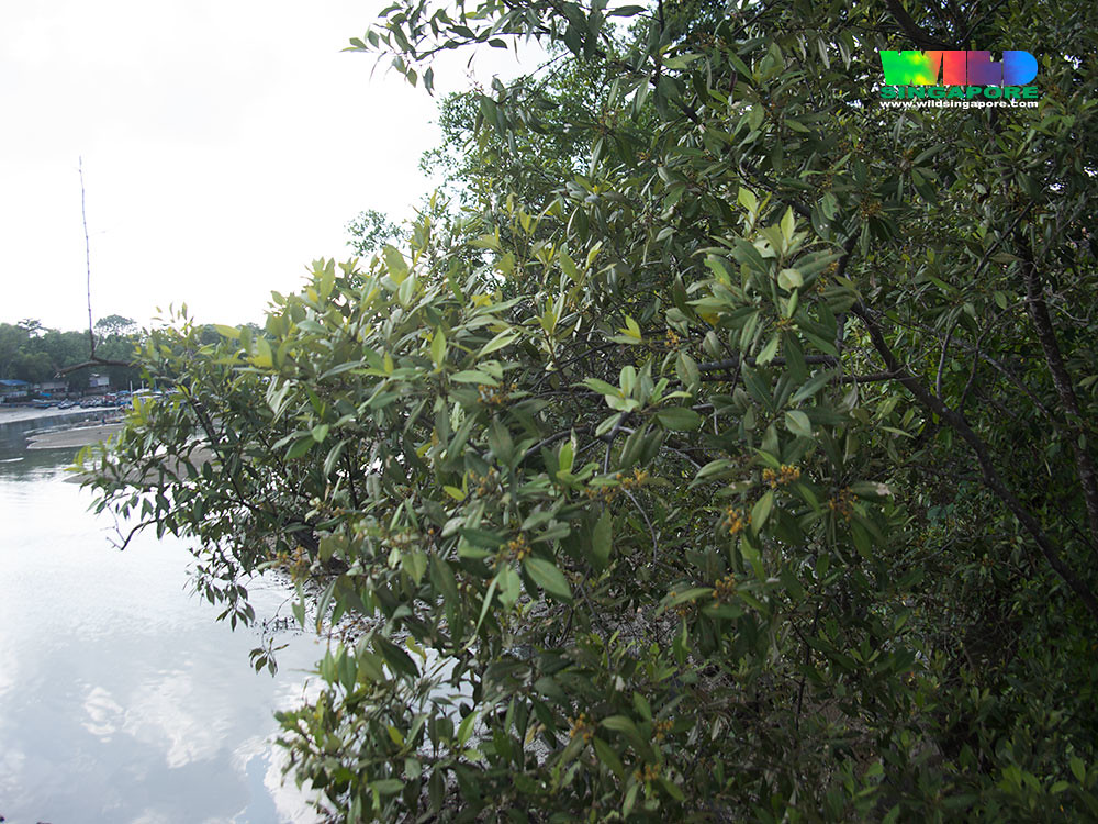 sojourners thought and mangrove island Mangrove islet is a small island in close proximity to swan island (victoria),  australia it is also close to rabbit island the name of the island suggests that  there.