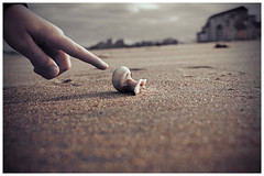 Show Me (Silverio Photography) Tags: canon 60d 24mm pancake primelens beach sea shell color photoshop elements topaz adjust boston suburb massachuetts newengland revere