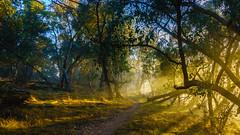 Sunrise on the Centenary Trail (CedricBear) Tags: landscape canberracentenarytrail sunrise nature sunlight australian australianlandscape