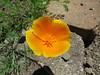 IMG_3302 (reuse) Tags: mayflowers