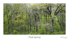 Peak Spring (baldwinm16) Tags: il illinois may mortonarboretum midwest nature season spring springgreen woodland woods pano panoramic natureofthingsphotography