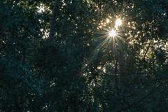 How Many Suns? (romype77) Tags: sony ilce6000 a6000 efs 55250mm f3556 is iii stm commlite milano naviglio navigli strada street cityscape panorama nature nautra gente people spring primavera lombardia italia vimodrone italy duck anatra pesca fishing river stream sunstar sun glare grass green parco park