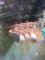 away we go (meeeeeeeeeel) Tags: ave patos bird weird hallucinations abstract surreal ducks iphone iphoneography filtro beadfilter glassfilter filter opticaleffects optics fantasy fantasia surrealismo hazy experimental water