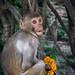 Monkey_Swayambhunath_Nepal_Web 1