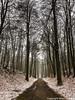 Tervuren Park Winter Walk (MikeChet) Tags: tervuren vlaanderen belgium