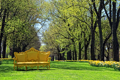 a royal bench in the park....Explored 05/10/17 (LotusMoon Photography) Tags: bench benchmonday yellow happybenchmonday nature park cantignypark cantigny trees spring seasons flowers daffodils blooming annasheradon lotusmoonphotography