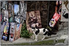The Laughing Boy (Galata Kulesi Art street Rural Metropolitan) (bryanasmar) Tags: turkey istanbul galata kulesi art laughing boy street tower fuji xt20 1655 28 xf xf1655 cat ngc